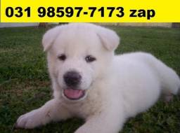 Cães Filhotes Diversos BH Top Akita Boxer Pastor Dálmatas Rottweiler Labrador Golden