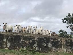 Fazenda em São Felipe