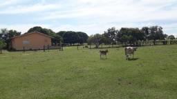 Fazenda ha 9 km da Rodovia dos Imigrantes em Varzea Grande