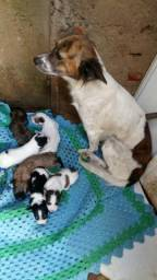 Vende 3 filhote de pudor valor 300 reais cada um esta com 15 dias D narcido