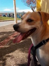 Heitor (Cão para adoção)