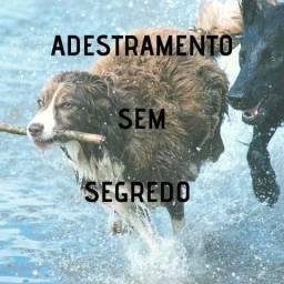 Adestramento de cães sem segredo