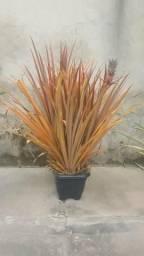 Planta de abacaxi ornamental