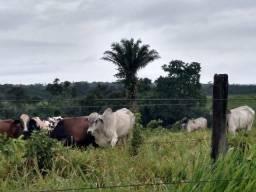 2.066 alqueires no Estado do Pará por 20 milhões zap (91)988697836