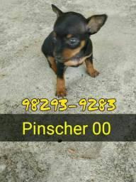 Pinscher 00