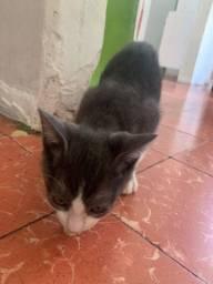 Doando gato