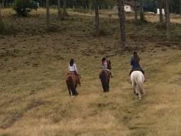 Alugo campo para cavalo