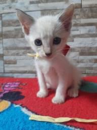 Gatinhos para adoção!