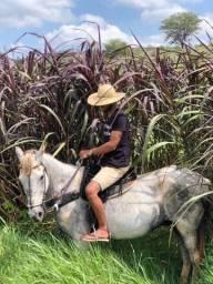 Vende-se uma cavalo de vaquejada