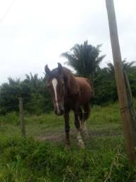 Estou vendendo um cavalo de cavalgada muito bom