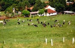 NS -Rurais/  Rancho / Sitio a venda - Paraná