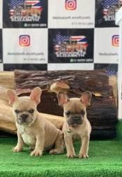 Título do anúncio: Bulldog Frances Machos