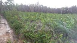 200 hectares no gurutil municipio de mirinzal a 180 km de são luis maranhão