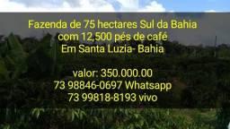 Fazenda de 75 hectares de café e pecuária Sul da Bahia
