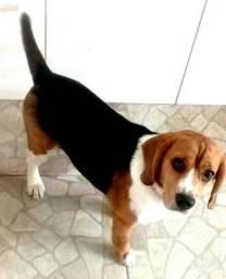 Cobertura de Beagle