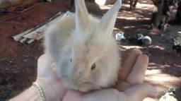 Coelhinho da páscoa- filhotes