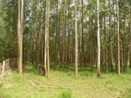 Sítio com 40 hectares em Bom Retiro - SC (Nogueira Imóveis Rurais)