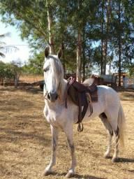 Cavalo Mangalarga Marchador MM