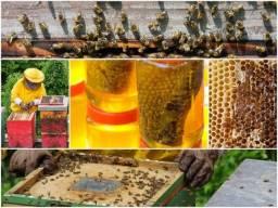 Título do anúncio: credito para apicultores e agricultores