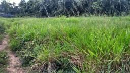 Fazenda 726 hectares