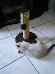Adoção Responsável (Gatinhas)