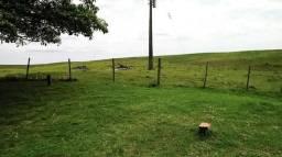 Area Rural - Pecuaria