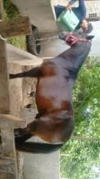 Cavalo pra vender ligeiro
