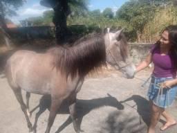 Vendo pouca de égua manga laga 2 anos de idade   cidada Caucaia ce * cleya