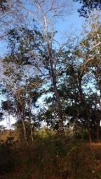 Fazenda 193 hectares Santa Fe de Minas mg