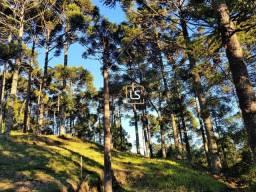Terreno à venda, 1182 m² por R$ 1.749.000,00 - Aspen Mountain - Gramado/RS