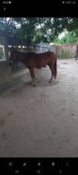 Título do anúncio: Vendo cavalo de vaquejada