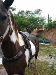 V/T Cavalo de Vaquejada