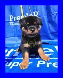 Rottweiler à venda com pedigree 65 99232 8737