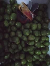 Vendo abacates!!!