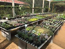 Venda de cactos e suculentas variadas com ótimo preço / Recanto do Verde