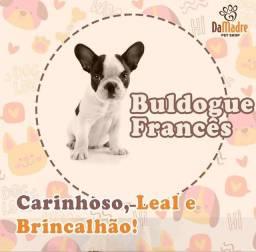 Título do anúncio: Bulldogue francês filhotes lindos