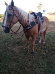 Título do anúncio: Cavalo QM , de esteira