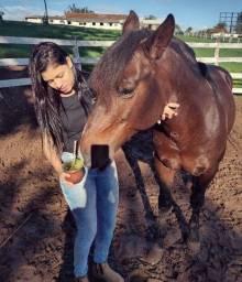 Cavalo zaino cuiudo