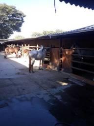 Promoção de Aluguel de baías para cavalos