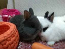 Mini coelhos.
