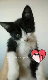Doação Gato fêmea 2 meses