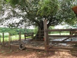 Procuro Sítio para arrendar. (Região de São José do Rio Preto / Guapiaçu)