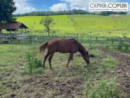 2006/Maravilhosa fazenda/haras de 70 ha em Cons.Lafaiete a 110 km de BH