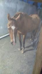 Cavalo para ensinar criança.
