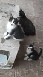 Casal de filhotes de gato