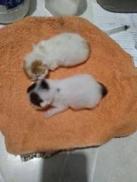 Lindo gatos pesa recem nascidos entregar so 10.10