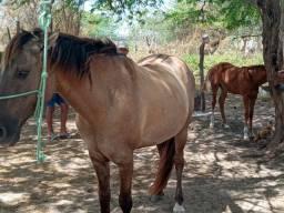 Cavalo de Esquerda e direita