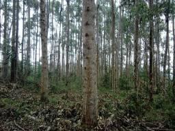 Floresta Grandis