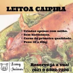 Título do anúncio: Porco Leitão Leitoa Caipira 10 a 15 kg para assar.
