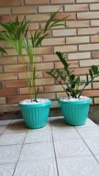 2 vasos com plantas